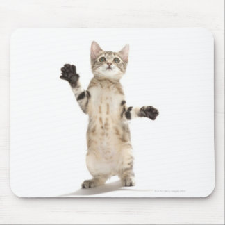 Kitten on white background mouse pad