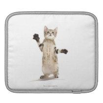 Kitten on White Background Sleeve For iPads