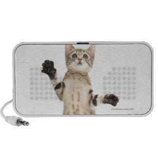 Kitten on white background travel speakers