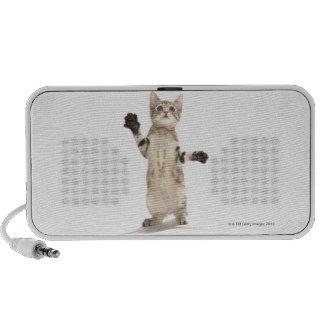 Kitten on White Background Notebook Speaker