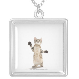 Kitten on white background square pendant necklace