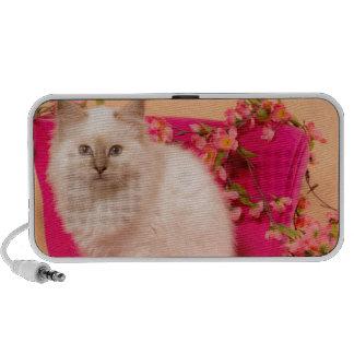 kitten one pink flesh mini speaker