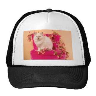 kitten one pink flesh trucker hat
