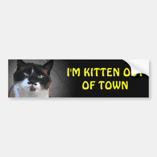 Kitten out of Town Bumper Sticker