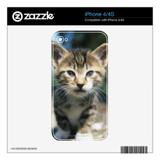 Kitten outdoors skins for the iPhone 4S