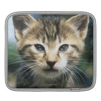 Kitten outdoors sleeves for iPads