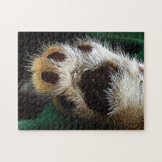 Kitten Paw and Pads Photograph Puzzles
