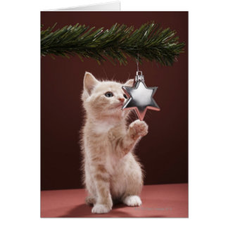 Kitten pawing Christmas decoration on tree Card