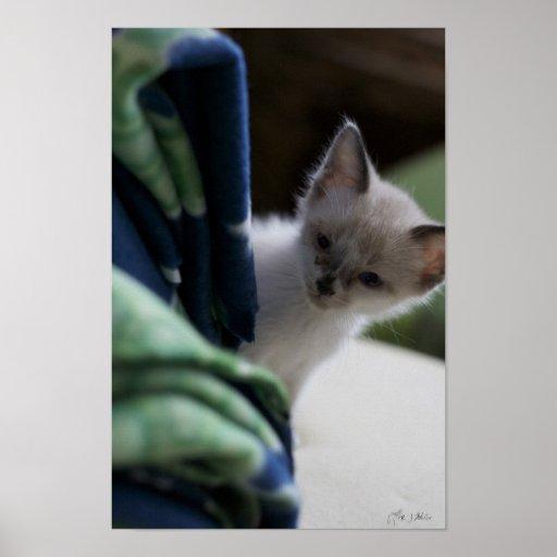 Kitten Peaking Poster