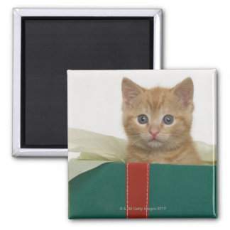 Kitten peeking out of gift box refrigerator magnet