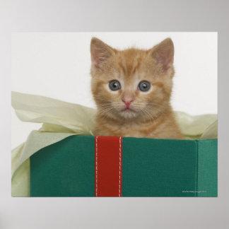 Kitten peeking out of gift box poster