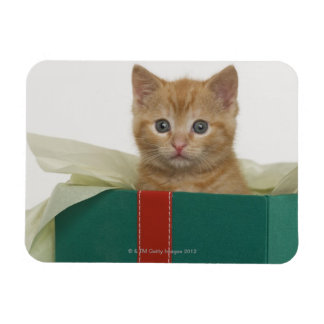 Kitten peeking out of gift box vinyl magnet