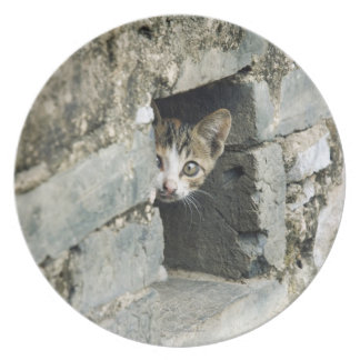 Kitten Peeking out of Wall, Yangshuo, Guangxi Dinner Plate