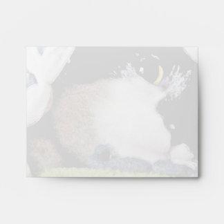 Kitten Peeking Under Blanket Envelope