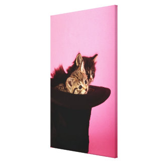 Kitten peeping out of hat canvas print