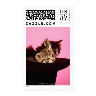 Kitten peeping out of hat postage