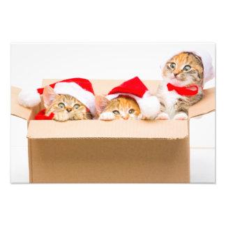 Kitten Photo Print