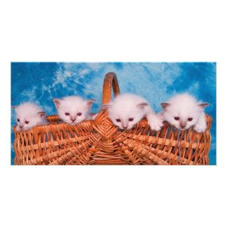 kitten customized photo card