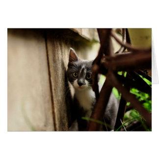 kitten photograph card