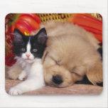 Kitten Pillow Mousepads