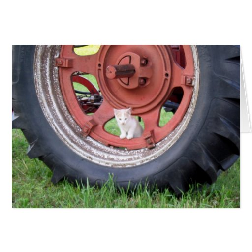 Kitten playing on a tractor cards