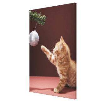 Kitten playing with Christmas bauble on tree Canvas Print