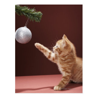 Kitten playing with Christmas bauble on tree Postcard
