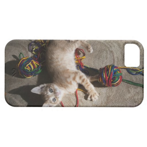 Kitten Playing With Yarn iPhone 5 Cover