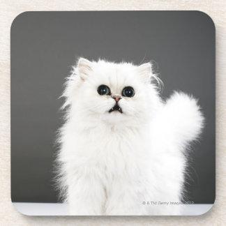 Kitten Portrait Coaster