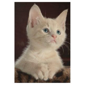Kitten portrait wood poster