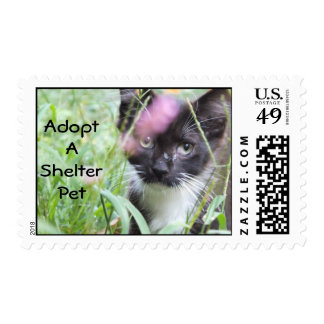 Kitten Postage/Adopt a Pet Stamp