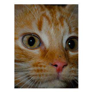 Kitten Postcard