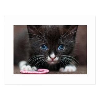 Kitten Power Postcard