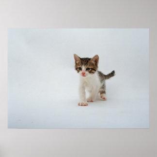 Kitten Power Print