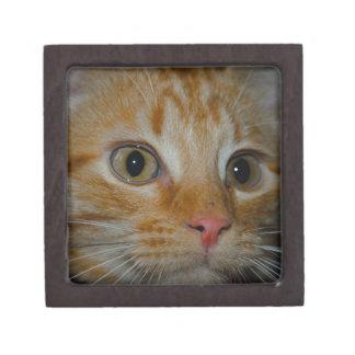 Kitten Premium Trinket Boxes