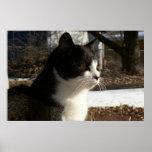 Kitten Profile Print