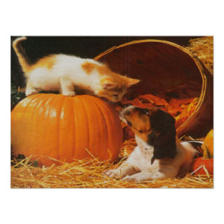 Kitten, Pumpkin and Puppy Print Poster