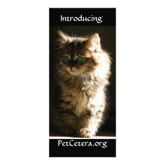Kitten Rack Card
