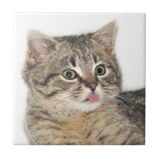Kitten razzberry tile