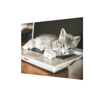Kitten resting on laptop computer canvas print