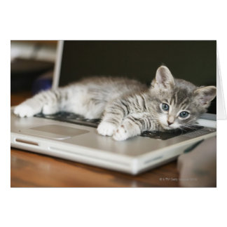 Kitten resting on laptop computer card
