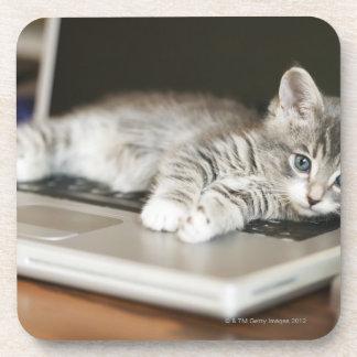 Kitten resting on laptop computer beverage coaster