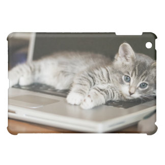 Kitten resting on laptop computer cover for the iPad mini