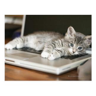 Kitten resting on laptop computer postcard