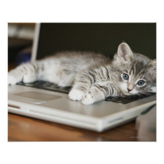 Kitten resting on laptop computer poster