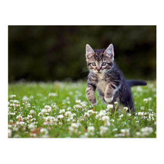 Kitten Running Through Clover Postcard
