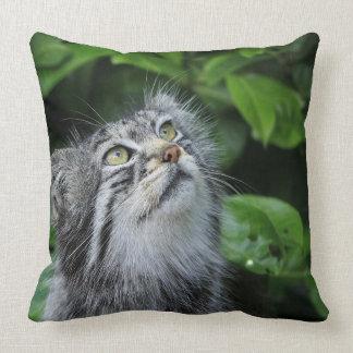 Kitten Saying A Prayer Throw Pillow