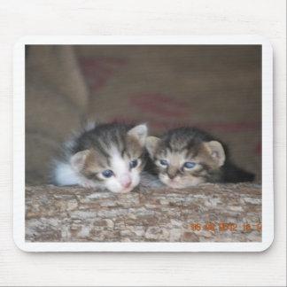Kitten siblings mouse pad