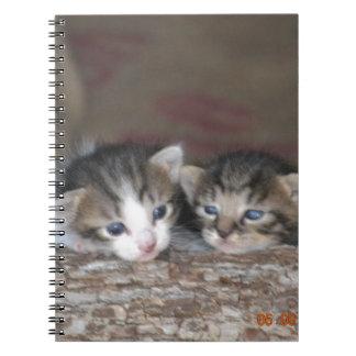 Kitten siblings spiral note books