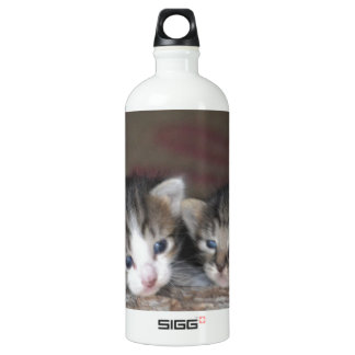 Kitten siblings SIGG traveler 1.0L water bottle
